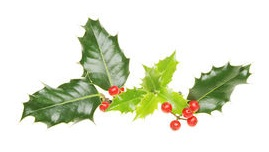 holly-and-berries-stock-photo_csp5028984